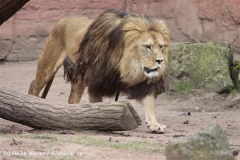 Zoo_Hannover_120412_IMG_6371