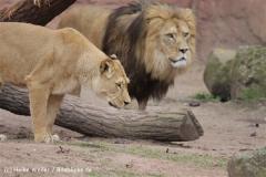 Zoo_Hannover_120412_IMG_6379