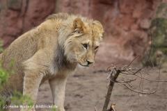 Zoo_Hannover_120412_IMG_6382