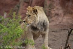 Zoo_Hannover_120412_IMG_6383
