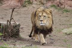 Zoo_Hannover_120412_IMG_6389