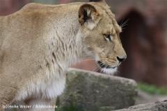 Zoo_Hannover_120412_IMG_6391