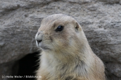 Zoo_Hannover_120412_IMG_6394