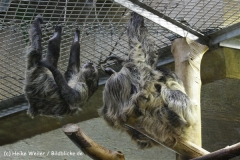 Zoo_Hannover_120412_IMG_6412