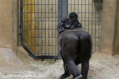 Zoo_Hannover_120412_IMG_6429