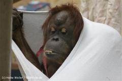 Zoo_Hannover_120412_IMG_6434