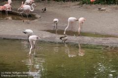 Zoo_Hannover_150520_IMG_0265
