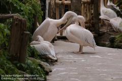 Zoo_Hannover_150520_IMG_0266