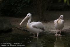 Zoo_Hannover_150520_IMG_0281