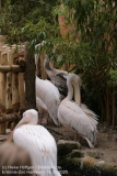 Zoo_Hannover_150520_IMG_0282