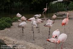 Zoo_Hannover_150520_IMG_0284