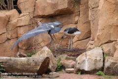 Zoo_Hannover_150520_IMG_0290