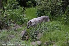 Zoo_Hannover_150520_IMG_0292
