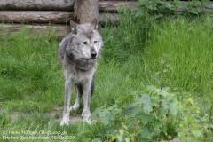 Zoo_Hannover_150520_IMG_0296