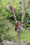 Zoo_Hannover_150520_IMG_0307