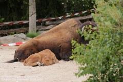 Zoo_Hannover_150520_IMG_0310