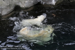 Zoo_Hannover_150520_IMG_0360
