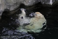Zoo_Hannover_150520_IMG_0369