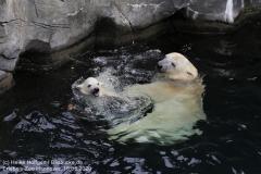 Zoo_Hannover_150520_IMG_0371