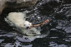 Zoo_Hannover_150520_IMG_0421
