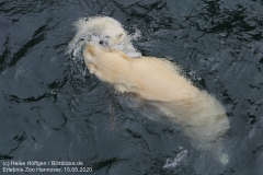 Zoo_Hannover_150520_IMG_0430