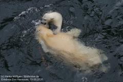 Zoo_Hannover_150520_IMG_0431