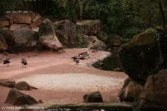 Zoo_Hannover_160916_IMG_9127