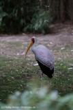Zoo_Hannover_160916_IMG_9128