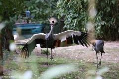 Zoo_Hannover_160916_IMG_9133