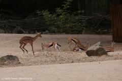Zoo_Hannover_160916_IMG_9139