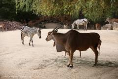 Zoo_Hannover_160916_IMG_9147
