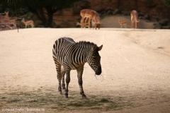 Zoo_Hannover_160916_IMG_9155