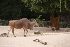 Zoo_Hannover_160916_IMG_9157