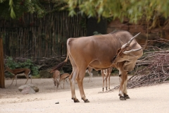 Zoo_Hannover_160916_IMG_9160