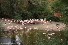 Zoo_Hannover_160916_IMG_9175