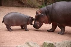 Zoo_Hannover_160916_IMG_9184
