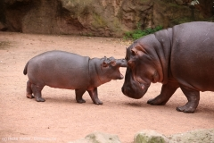 Zoo_Hannover_160916_IMG_9185