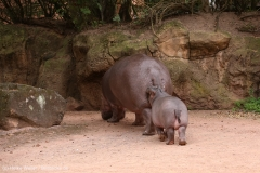 Zoo_Hannover_160916_IMG_9189