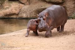 Zoo_Hannover_160916_IMG_9192