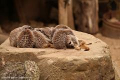 Zoo_Hannover_160916_IMG_9243