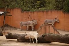 Zoo_Hannover_160916_IMG_9251