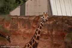 Zoo_Hannover_160916_IMG_9252