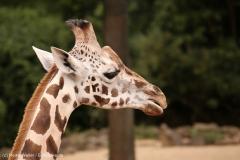 Zoo_Hannover_160916_IMG_9256