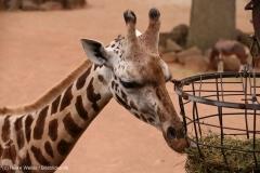 Zoo_Hannover_160916_IMG_9260