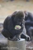 Zoo_Hannover_161118_IMG_8772