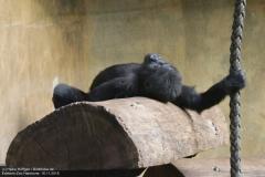 Zoo_Hannover_161118_IMG_8780