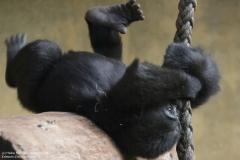 Zoo_Hannover_161118_IMG_8782