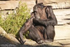 Zoo_Hannover_161118_IMG_8842