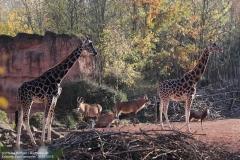 Zoo_Hannover_161118_IMG_8849
