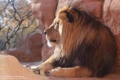 Zoo_Hannover_161118_IMG_8850